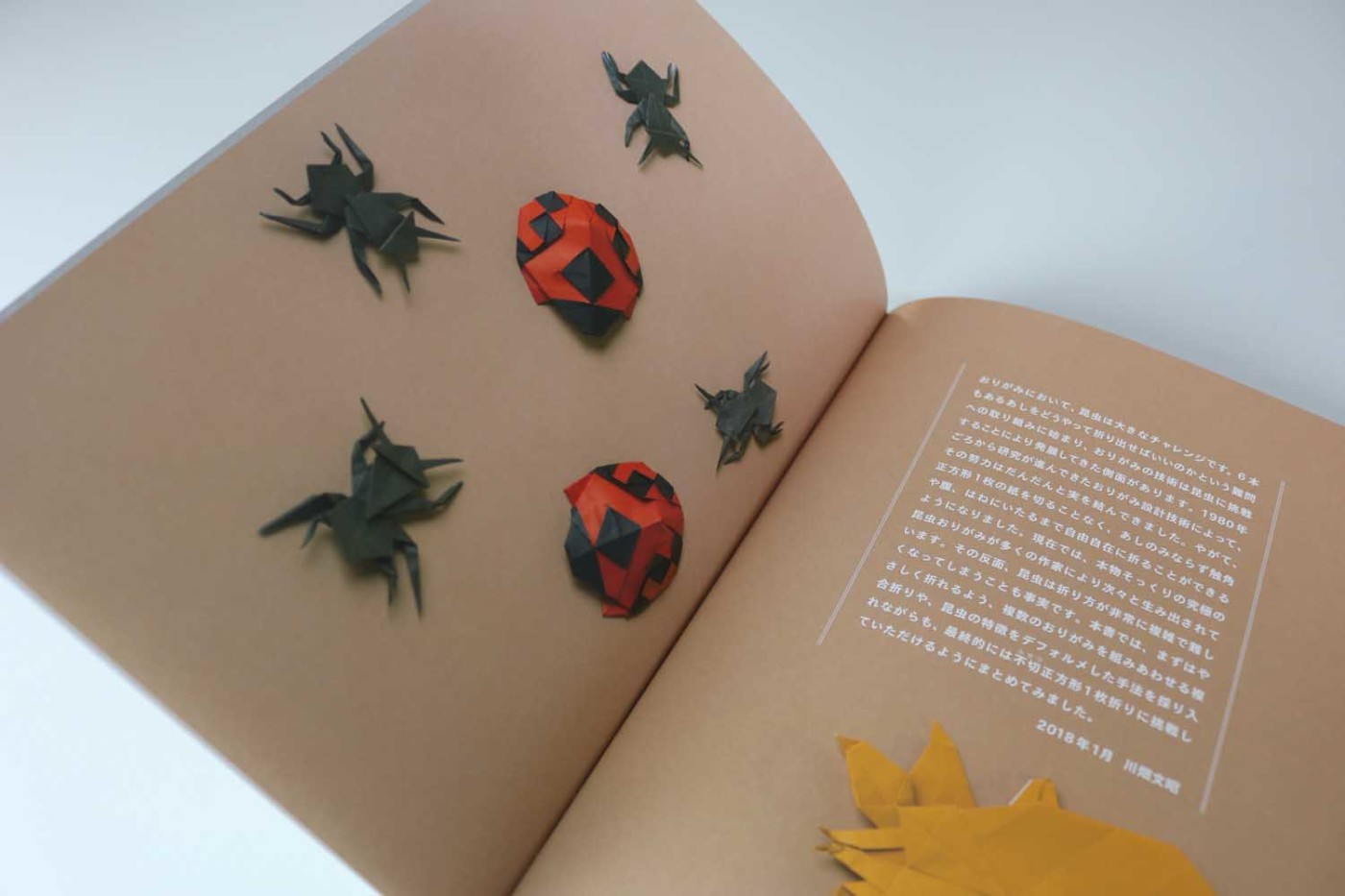 Origami Insects – VIERECK VERLAG - photo#18
